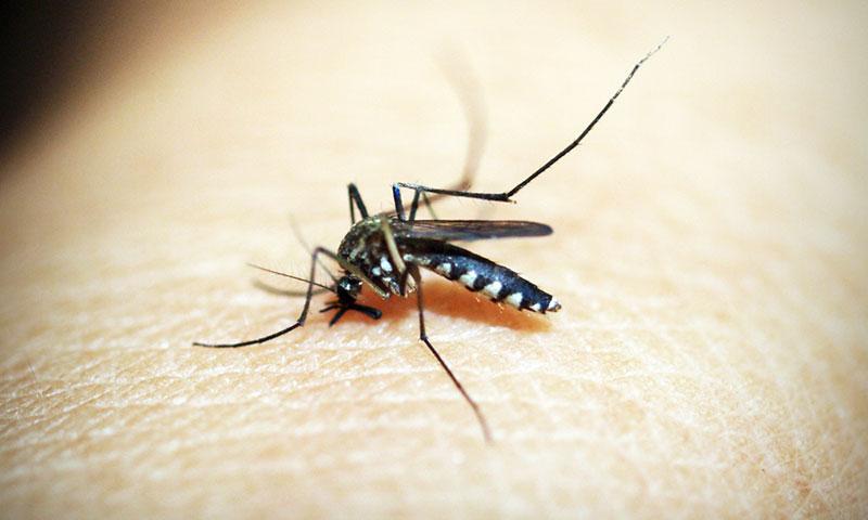 Комари - интересни факти и как да се справим с тях