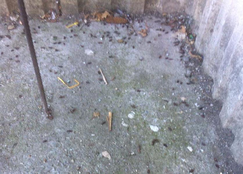 Хлебарки в панелен блок.Борба с хлебарките в жилищен блок. Третиране срещу всякакви видове вредители. На снимката виждате резултат от пръскане на подпокривното пространство срещу хлебарки.